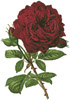 Duchesse De Dino Rose - Cross Stitch Chart