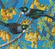 Tuis and Kowhai - Cross Stitch Chart