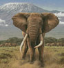 African Giants (Crop) - Cross Stitch Chart