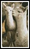 Alpacas - Cross Stitch Chart
