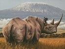 Amboseli (Crop) - Cross Stitch Chart