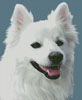 American Eskimo Dog 3 - Cross Stitch Chart