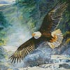 American Majesty (Crop) - Cross Stitch Chart