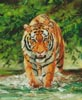 Amur Tiger on Water - Cross Stitch Chart