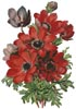 Anemones - Cross Stitch Chart