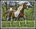 Arabian Horse - Cross Stitch Chart