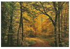 Autumn Forest - Cross Stitch Chart