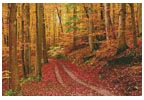 Autumn Path - Cross Stitch Chart