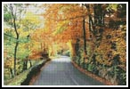 Autumn Road Photo - Cross Stitch Photo