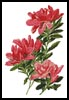 Azalea - Cross Stitch Chart