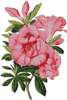 Azalea Indica - (Facebook Group) Cross Stitch Chart