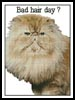 Bad Hair Day - Cross Stitch Chart