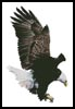 Bald Eagle Flying - Cross Stitch Chart
