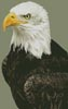 Bald Eagle Portrait - Cross Stitch Chart
