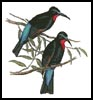 Bee Eaters - Cross Stitch Chart