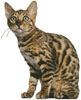 Bengal Cat - Cross Stitch Chart