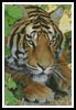 Bengal Tiger 3 - Cross Stitch Chart