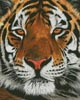 Bengal Tiger Portrait - Cross Stitch Chart