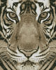 Bengal Tiger (Sepia) - Cross Stitch Chart
