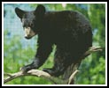 Black Bear Cub - Cross Stitch Chart