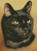 Black Cat - Cross Stitch Chart