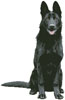 Black German Shepherd - Cross Stitch Chart