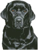 Black Labrador - Cross Stitch Chart