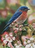 Blossoms and Buds - Cross Stitch Chart