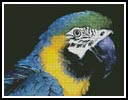 Blue and Yellow Macaw - Cross Stitch Chart