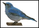 Blue Bird - Cross Stitch Chart