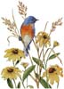 Bluebird and Susies - Cross Stitch Chart