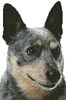 Blue Heeler Portrait - Cross Stitch Chart