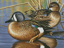 Blue Winged Teal Ducks - Cross Stitch Chart