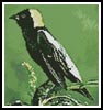 Bobolink - Cross Stitch Chart