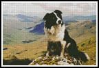 Border Collie in the Hills - Cross Stitch Chart