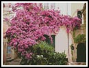 Bougainvillea - Cross Stitch Chart
