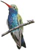 Broad-billed Hummingbird - Cross Stitch Chart