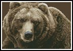 Brown Bear - Cross Stitch Chart