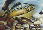 Brown Trout - Cross Stitch Chart