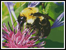 Bumble Bee - Cross Stitch Chart