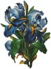 Bunch of Irises - Cross Stitch Chart