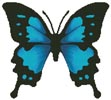 Butterfly Design 2 - Cross Stitch Chart