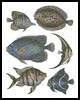 Butterfly Fish and Flounder - Cross Stitch Chart