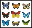 Butterfly Sampler - Cross Stitch Chart