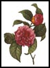 Camellias 2 - Cross Stitch Chart