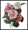 Camellias 4 - Cross Stitch Chart