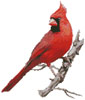 Cardinal - Cross Stitch Chart