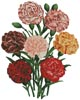 Carnations - Cross Stitch Chart