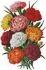 Carnations 3 - Cross Stitch Chart