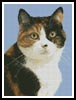 Cat 5 - Cross Stitch Chart